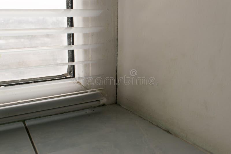 Champignon sur les fenêtres images libres de droits