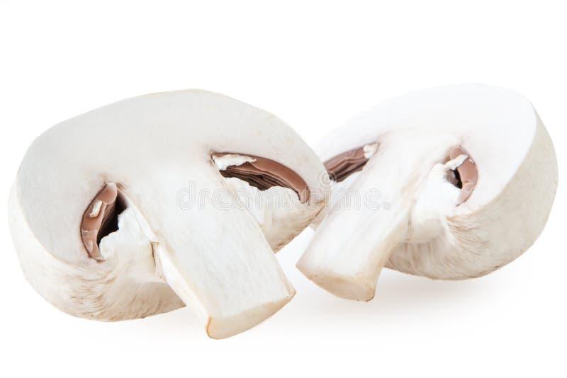 Champignonpilz getrennt auf weißem Hintergrund stockfotografie