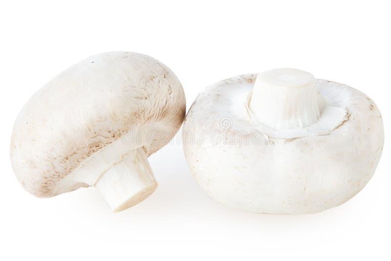 Champignonpilz getrennt auf weißem Hintergrund stockbilder