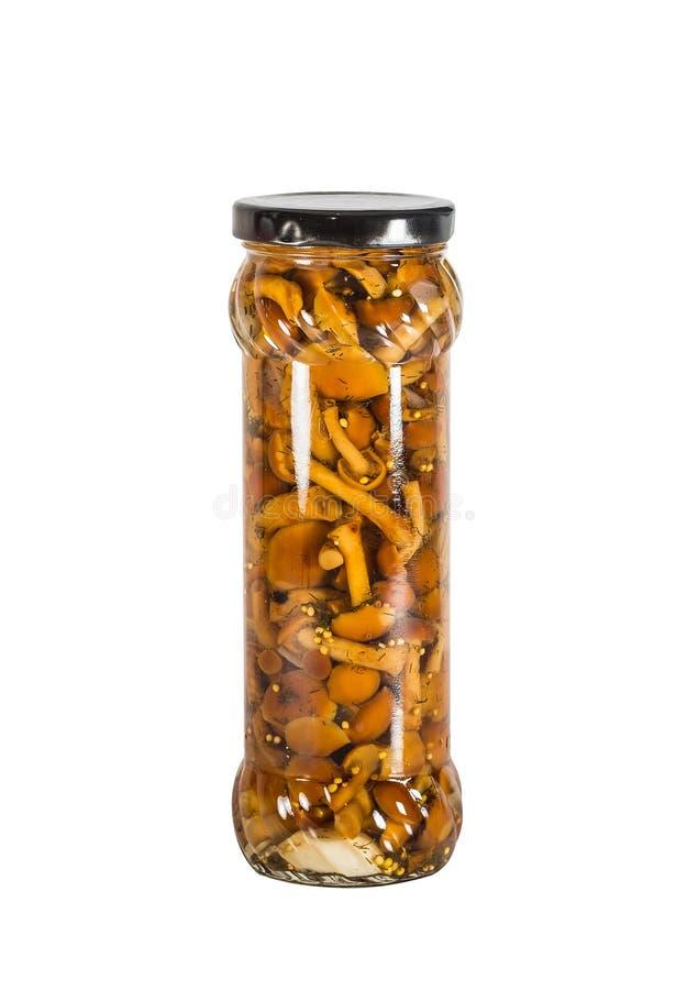 Champignons étamés et marinés image stock