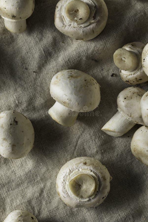 Champignons blancs organiques crus images stock