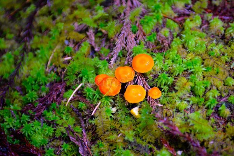 Champignons colorés sur l'au sol de forêt, les textures de nature et les modèles, Autumn Flora photo stock