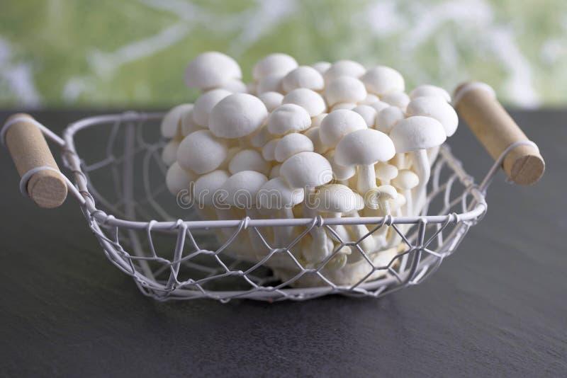 Champignons crus et blancs de Bunapi photos stock
