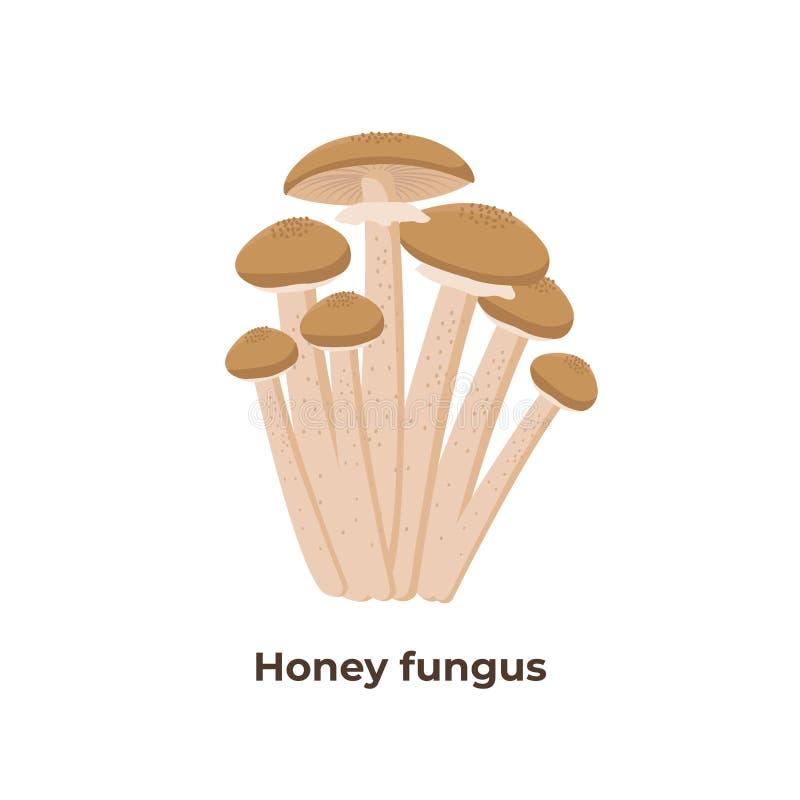 Champignons d'agaric de miel d'isolement sur le fond blanc, illustration de vecteur dans la conception plate illustration libre de droits