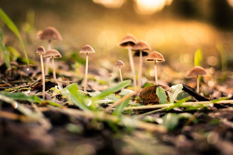 Champignons dans la forêt sauvage photographie stock libre de droits