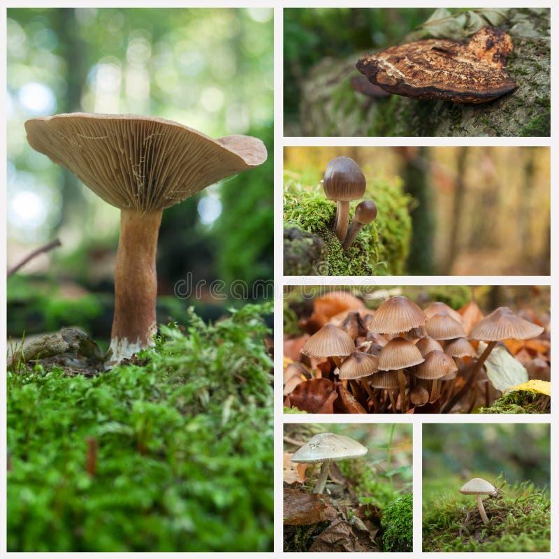 Champignons dans le collage automnal de forêt image libre de droits
