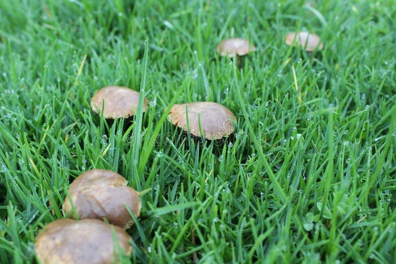 Champignons dans le jardin images stock
