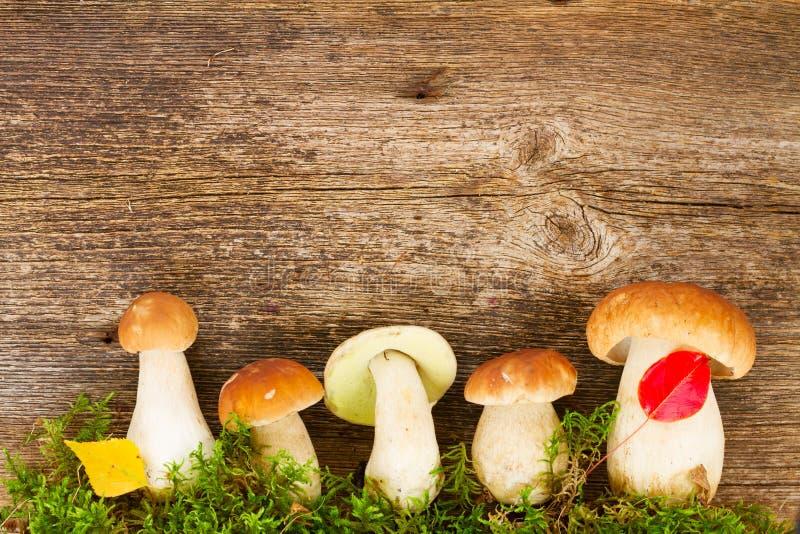 Download Champignons De Boletus Sur Le Fond En Bois Photo stock - Image du automne, organique: 77161358