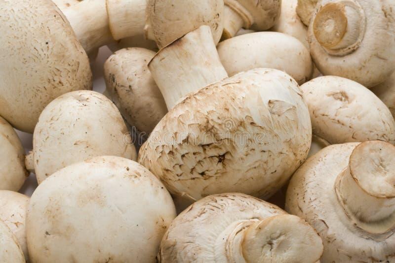 Champignons de champignon de paris images libres de droits