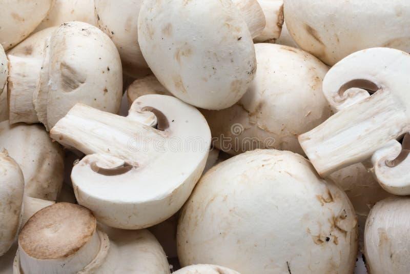 Champignons de champignon de paris photo libre de droits