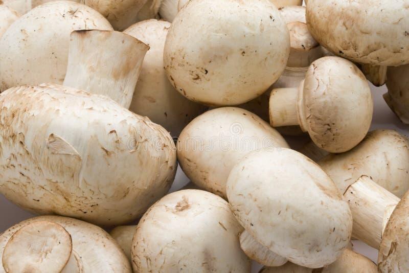 Champignons de champignon de paris photographie stock libre de droits