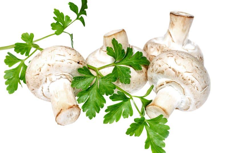 Champignons de champignon de paris avec la branche du persil frais photos libres de droits