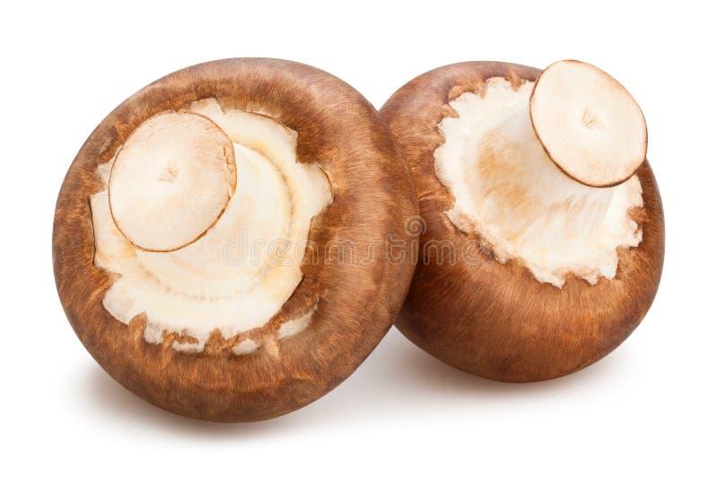 champignons de couche bruns photo stock