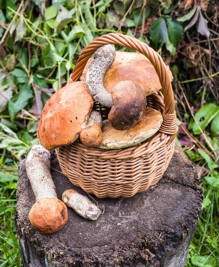 Download Champignons De Couche De Forêt Photo stock - Image du frais, fibre: 76085072