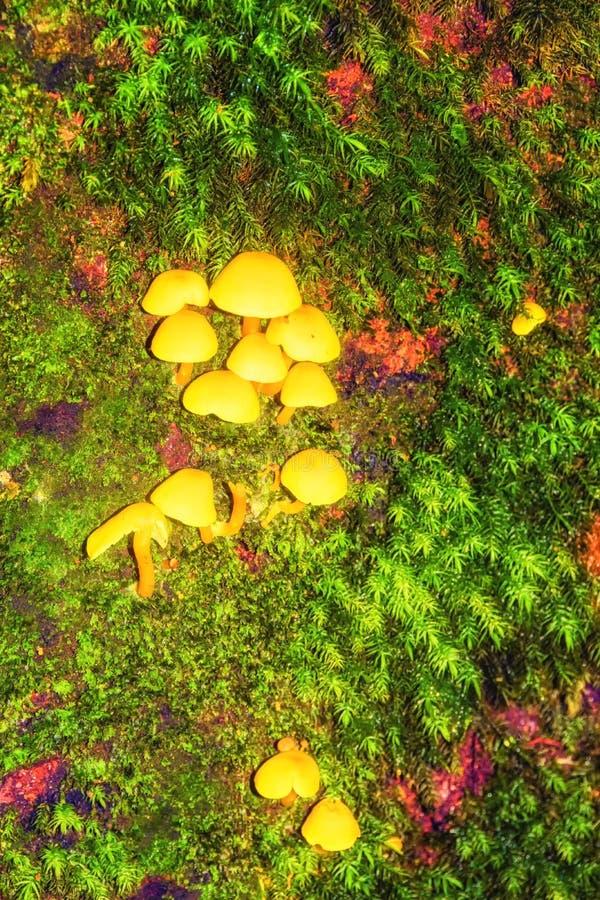 Champignons de couche magiques photo libre de droits