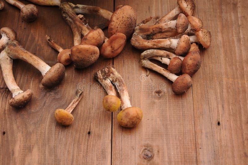 Champignons de couche sur une table en bois photo stock