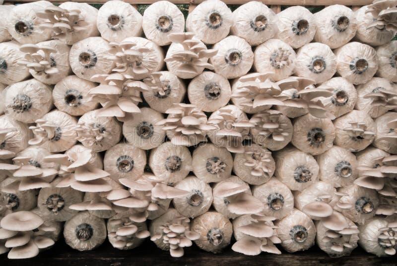 Champignons de crèche photo stock