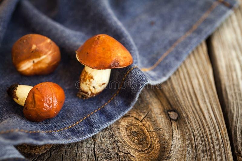 Champignons de cueillette de forêt Luteus comestible de Suillus de champignon photos libres de droits