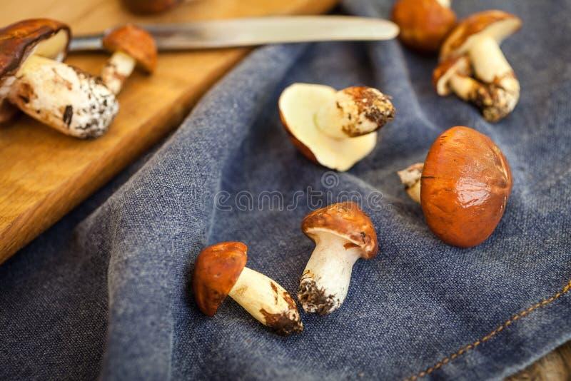 Champignons de cueillette de forêt Luteus comestible de Suillus de champignon images libres de droits