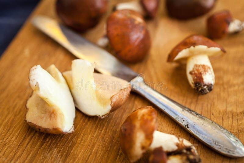 Champignons de cueillette de forêt Luteus comestible de Suillus de champignon photo libre de droits