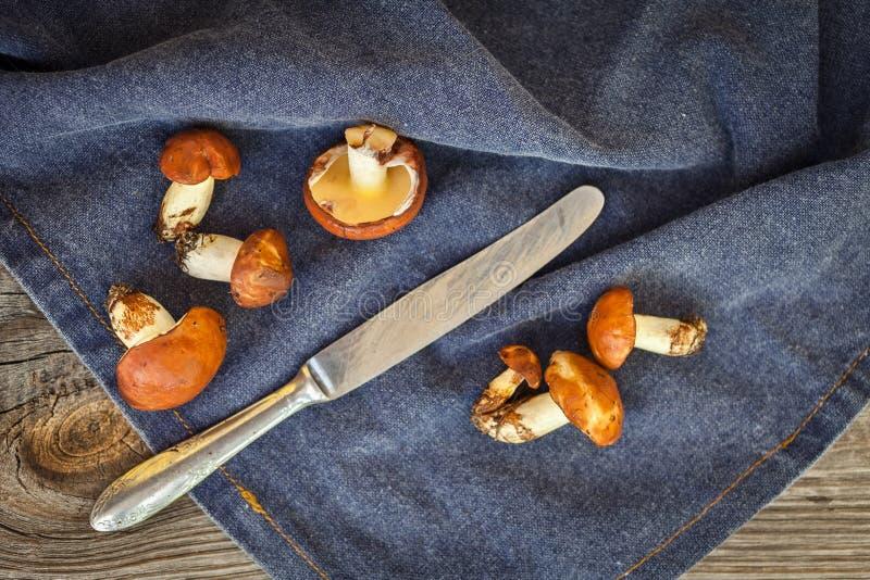 Champignons de cueillette de forêt Luteus comestible de Suillus de champignon image stock