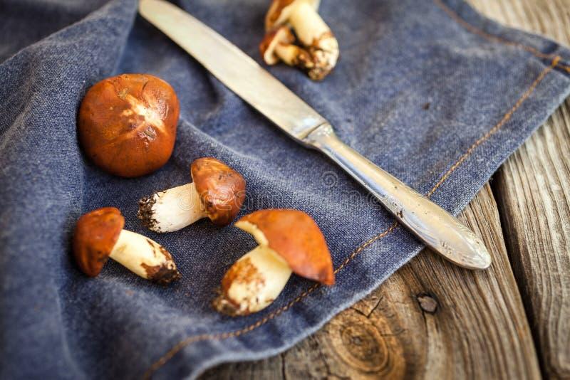 Champignons de cueillette de forêt Luteus comestible de Suillus de champignon image libre de droits
