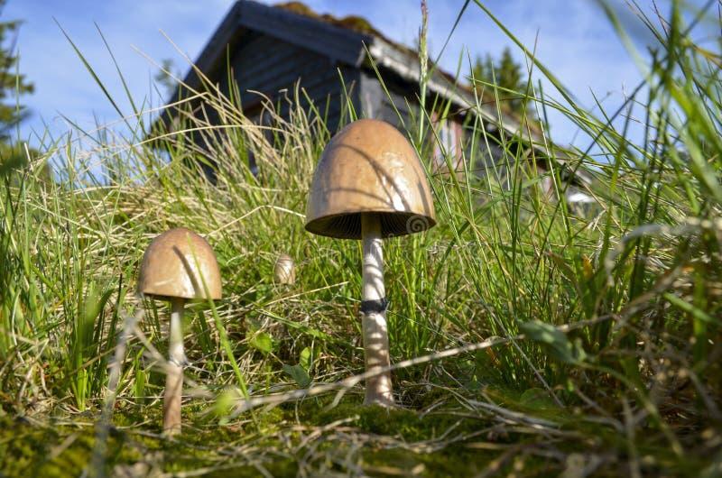 Champignons devant un cottage norvégien image stock