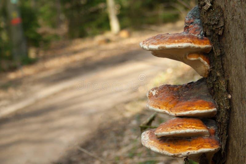 Champignons en bois et d'arbre par le bord de la route photographie stock libre de droits