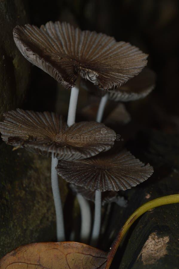 Champignons foncés photographie stock libre de droits