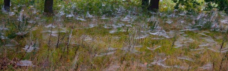 Champignons, forêt, organismes eucaryotiques, nourriture, nature, faune photographie stock libre de droits