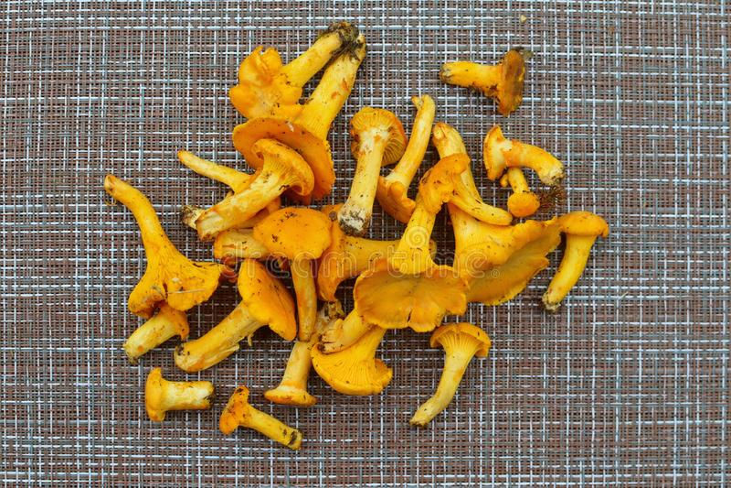 Champignons frais jaunes d'automne pour faire frire pour le dîner photographie stock libre de droits