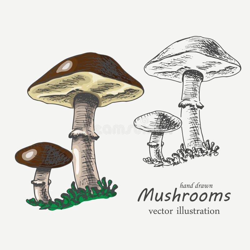 Champignons graphiques et colorés Illustration de vecteur illustration stock