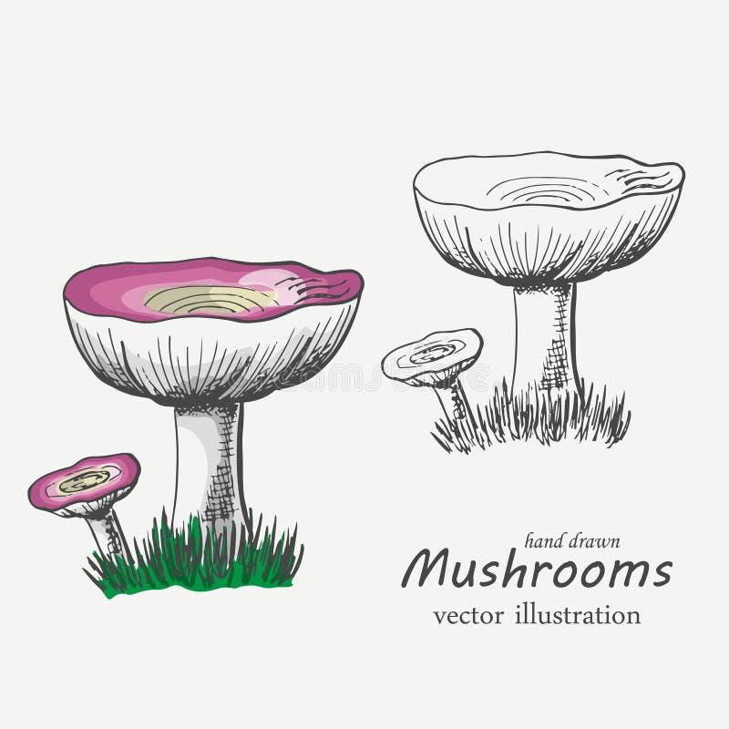 Champignons graphiques et colorés Illustration de vecteur illustration libre de droits