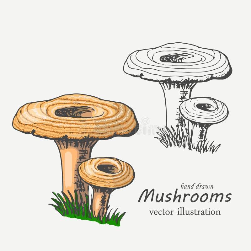Champignons graphiques et colorés Illustration de vecteur illustration de vecteur