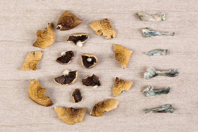Champignons magiques secs psychoactifs photographie stock