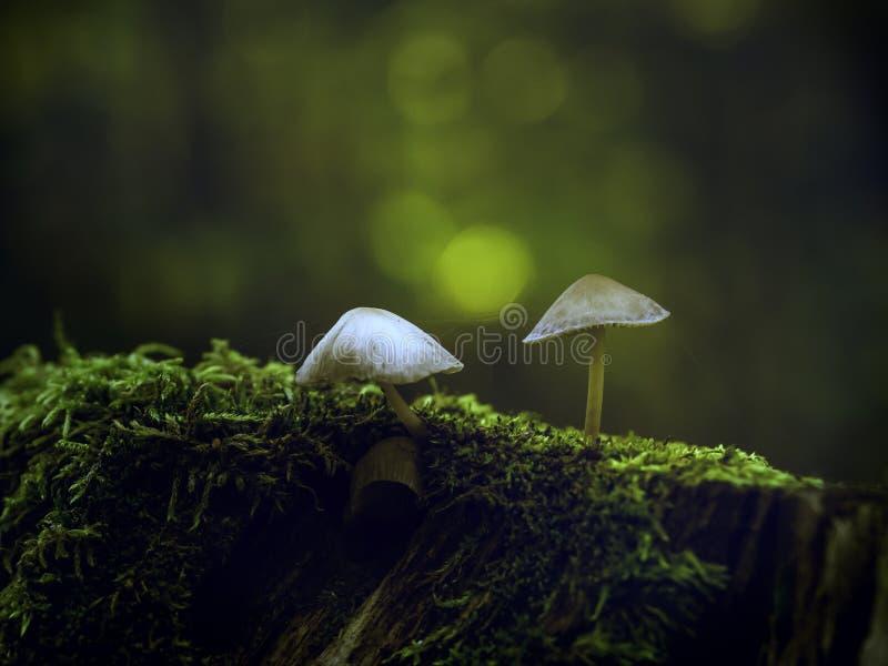 Champignons minuscules sur un tronc d'arbre photographie stock libre de droits