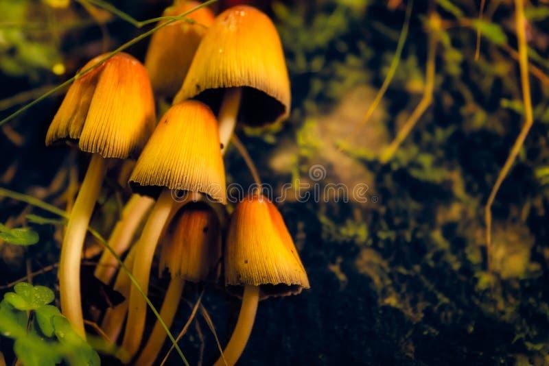 Champignons mystiques dans les ombres d'une forêt profonde image stock