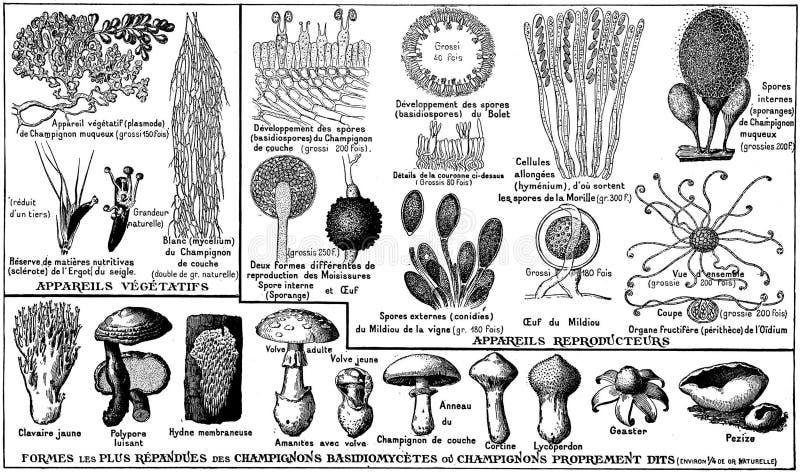 Champignons-oa Free Public Domain Cc0 Image
