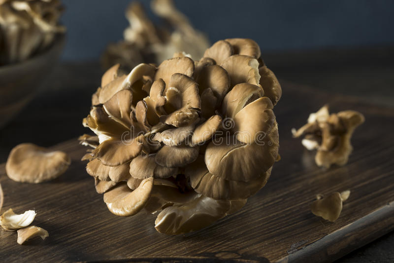 Champignons organiques crus de Maitake photos libres de droits