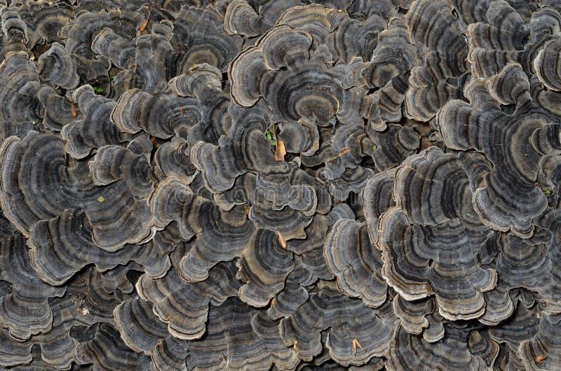 Champignons (parenthèse-champignon) 1 photographie stock libre de droits