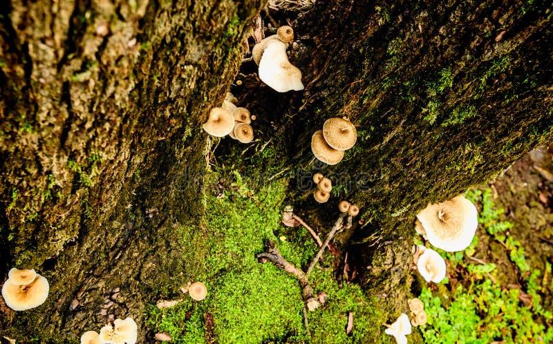 Champignons s'élevant sur les arbres dans les bois dans Monténégro image stock