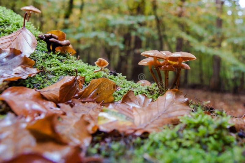 Champignons sauvages à l'automne dans forrest image stock