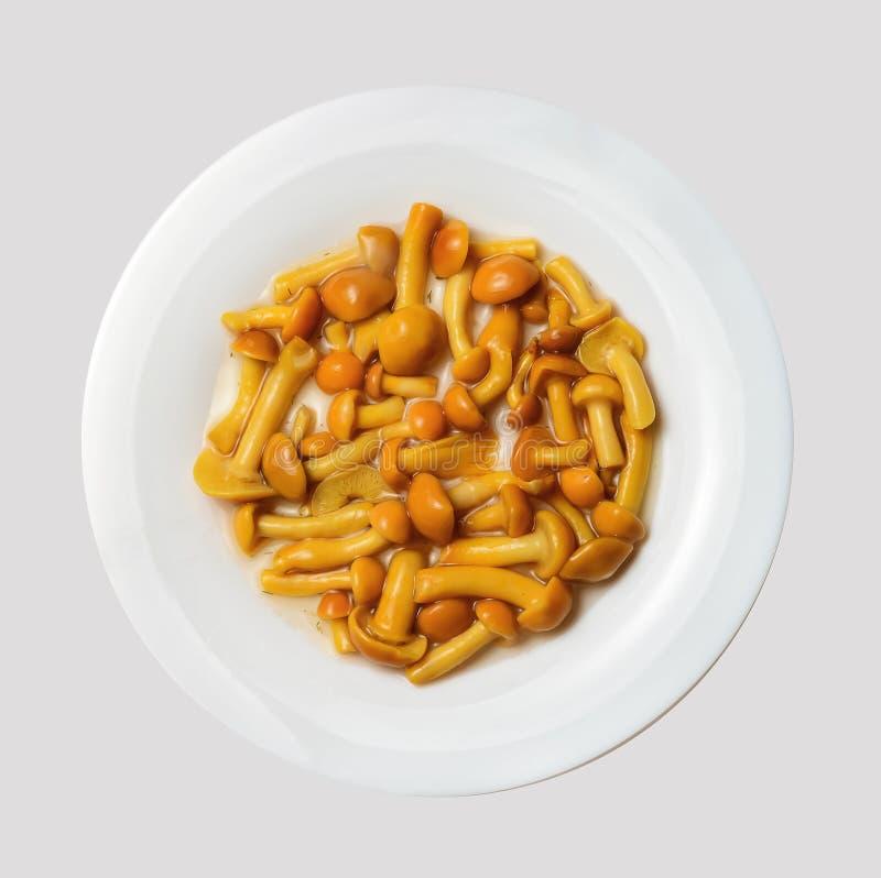 Champignons savoureux marinés d'un plat rond blanc Fond d'isolement gris-clair Vue de ci-avant image libre de droits