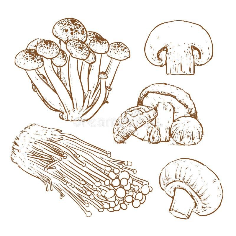 Champignons sur le fond blanc, tranche de champignon, champignon image stock