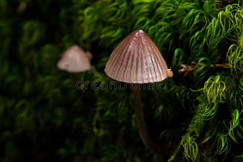 Champignons sur le plancher de forêt photos libres de droits