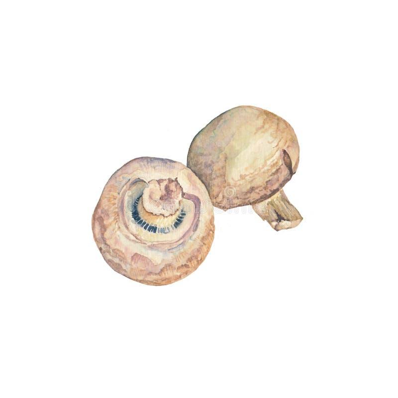 champinjon arkivbilder