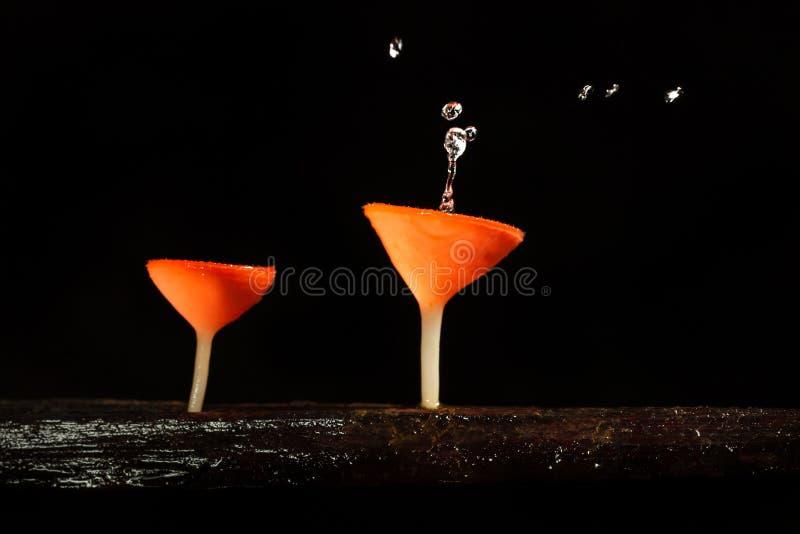 Champinjon för rosa färgbrännskadakopp (Tarzetta Rosea (Rea) royaltyfria bilder