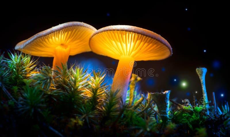 champinjon Glödande champinjoner för fantasi i gåtamörkerskog royaltyfri fotografi