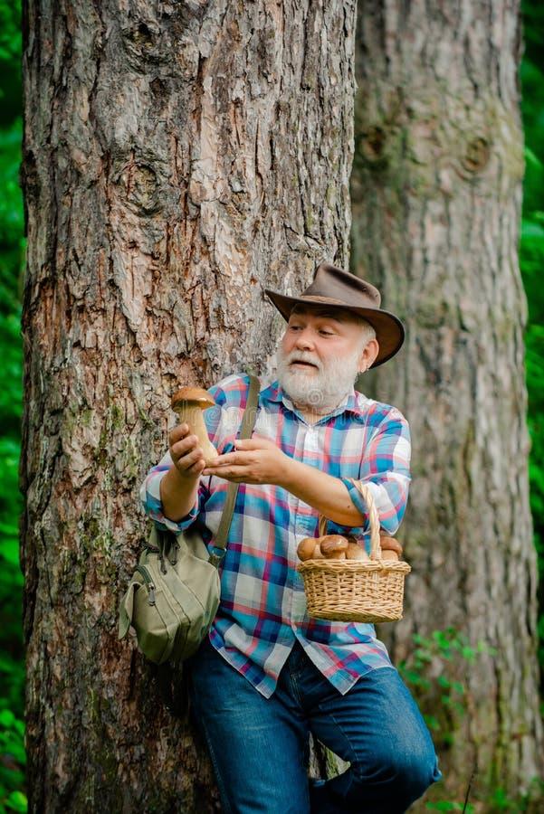 Champinjon i skogen, hög man som samlar champinjoner i den gamla skäggiga mushroomeren för skog i sommarskog arkivfoto