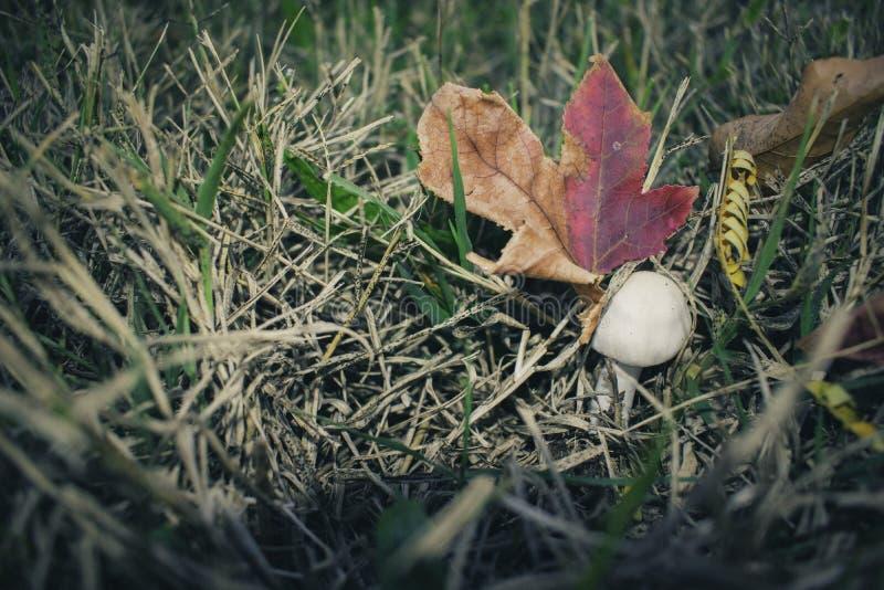Champinjon och Autumn Leaves fotografering för bildbyråer